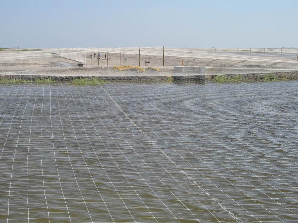 granja acuicola con malla antipajaros hortoova tenax dm tecnologias
