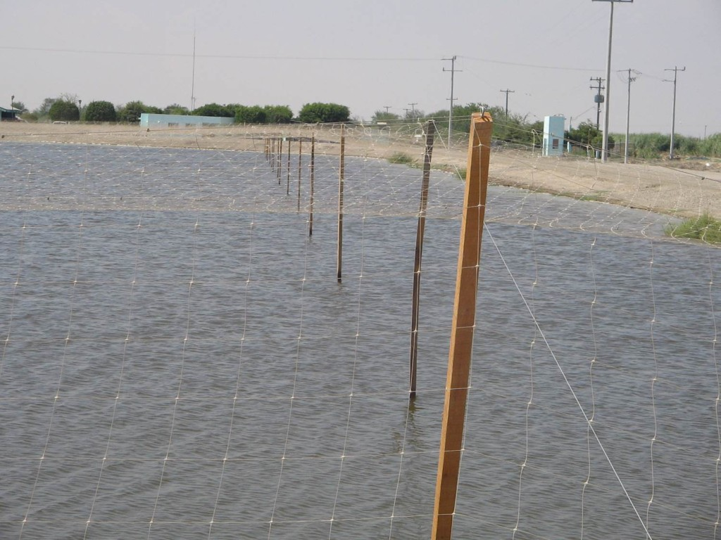granja acuicola con malla antipajaros hortoova tenax dm tecnologias 2