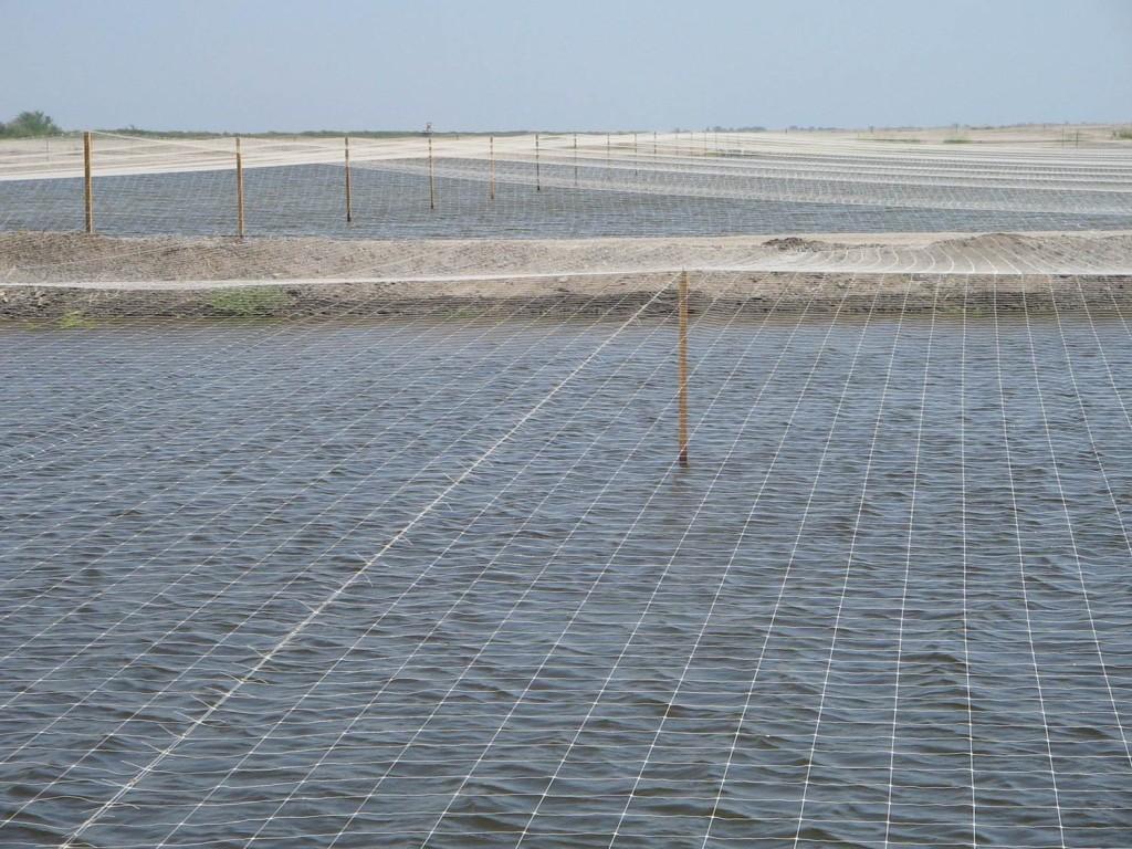 granja acuicola con malla antipajaros hortoova tenax dm tecnologias 3