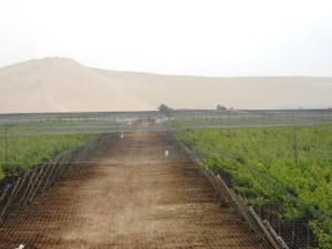 malla rompevientos antigranizo y antipajaros en uva 3