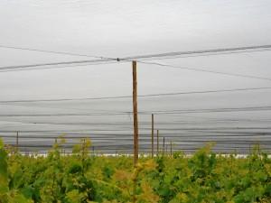 malla rompevientos antigranizo y antipajaros en uva