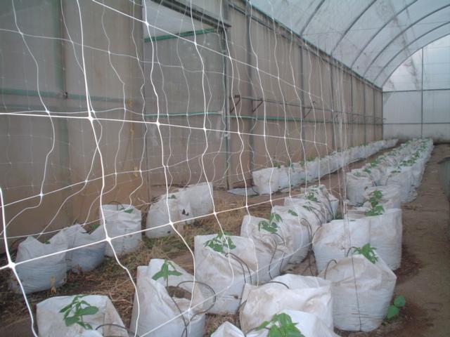 malla espadera hortonova para tomate de invernadero 2