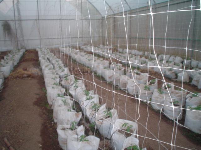 malla espadera hortonova para tomate de invernadero