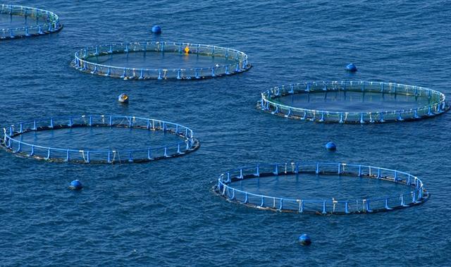 Construcci n de jaulas y encierros acuicolas dm tecnolog as for Jaulas flotantes para piscicultura